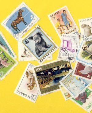 Állat (csak házi) – 50 klf. bélyeg