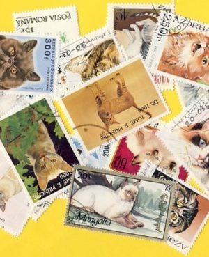 Macska (házi) – 50 klf. bélyeg