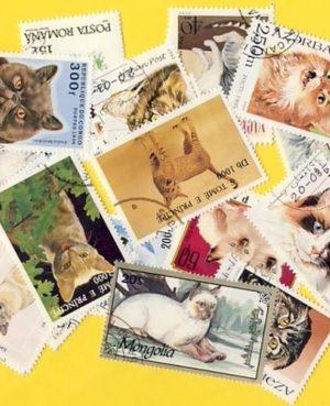 Macska (házi) – 100 klf. bélyeg