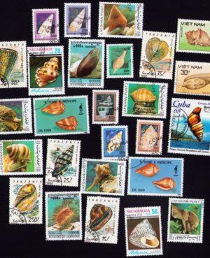 Kagyló – 25 klf. bélyeg
